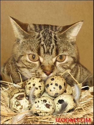 gato con huevos